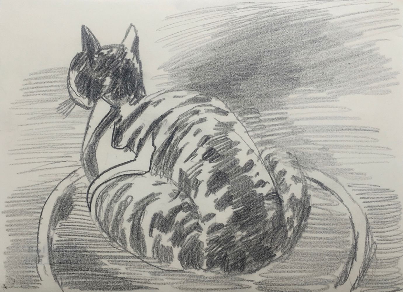 Curt Lahs | Cat | 1956 | pencil | verso dated and estate stamp | 15,4 x 21